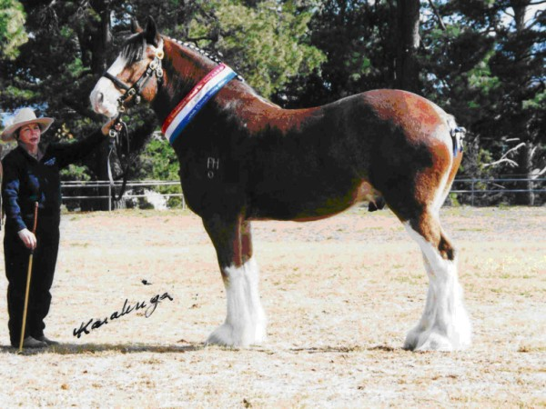 Registered quality show horses. Horses For Sale majority of the time